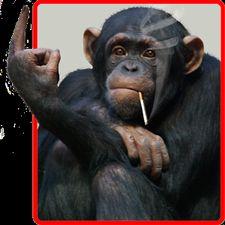 скачать обезьяны фото